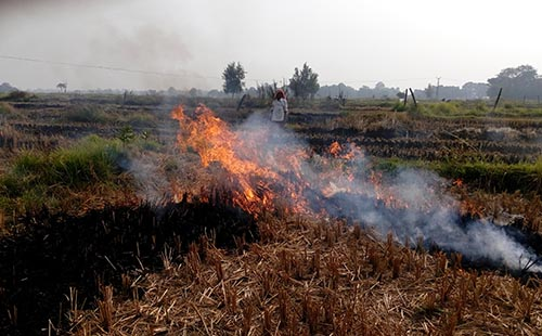 Study on Socio-Economic factors leading to Open Agricultural Burning in Nepal