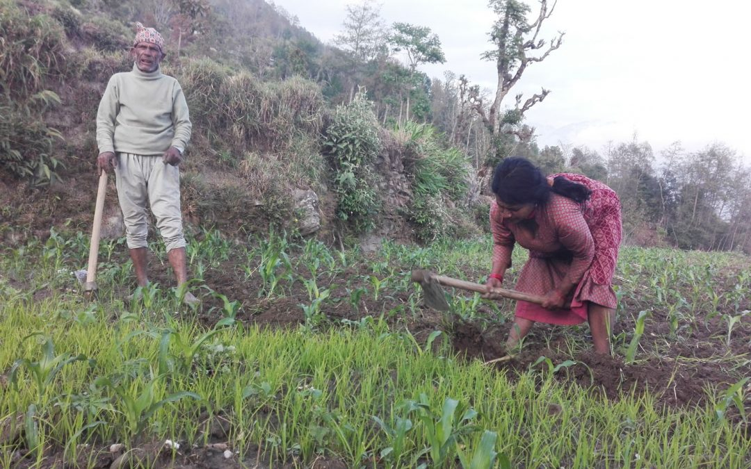 Evaluation of Livelihoods Based Self-Recovery (LBSR) Project in Nepal
