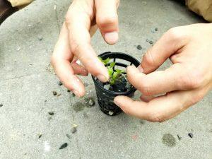 swn hydroponics 3