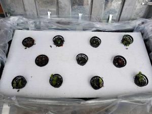 swn hydroponics 4