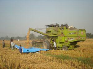 combine harvestor harvesting rice in rupendehi